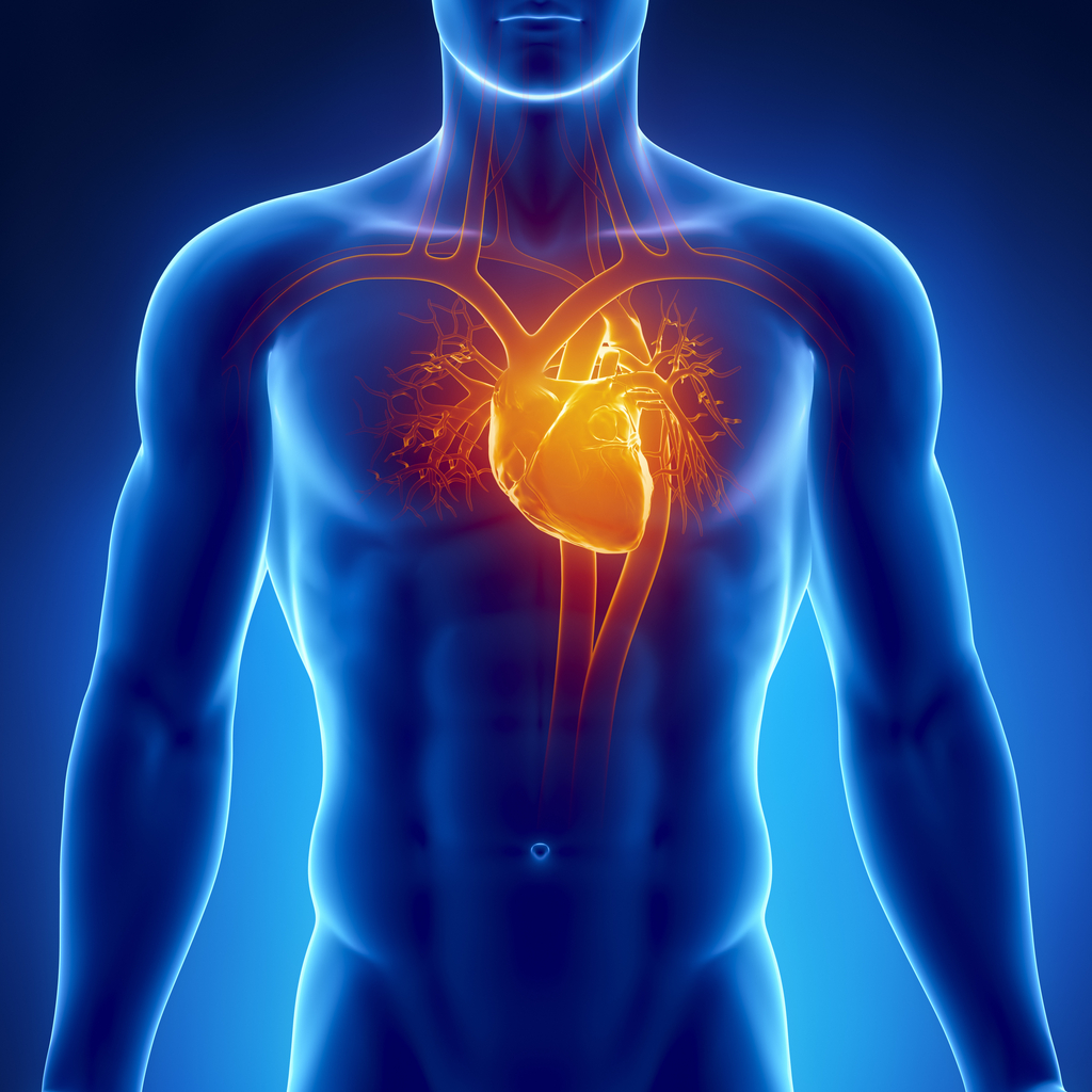 Cardiac Pulmonary Assessments